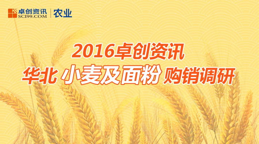 2016卓创资讯华北小麦及面粉购销调研
