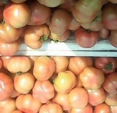上海江桥常年收购西红柿