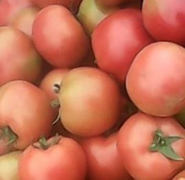 北京新发地西红柿