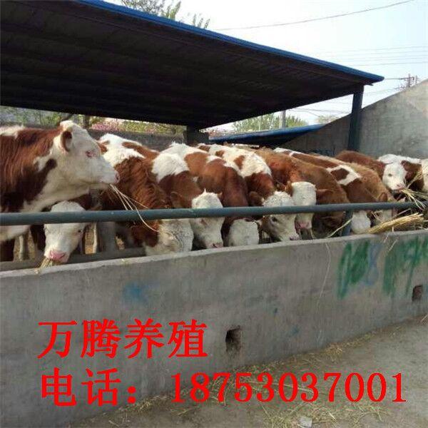 菏泽郓城黄堆集镇养殖户