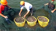 广东珠海聚农水产养殖合作社